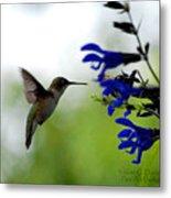 Hummingbird And Blue Flowers Metal Print