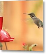 Hummingbird And Feeder Metal Print