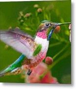 Hummingbird And Flower Painting Metal Print