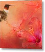 Hummingbird And Peach Hibiscus Metal Print