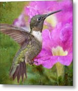 Hummingbird And Petunias Metal Print by Bonnie Barry