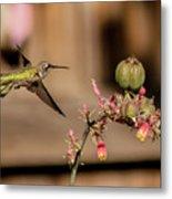 Hummingbird And Red Yucca Metal Print