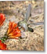 Hummingbird And The Hedgehog  Metal Print