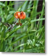 Hummingbird And Tiger Lilly Metal Print
