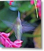 Hummingbird Angel Metal Print