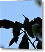 Hummingbird At Sunrise Silhouette Metal Print