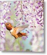 Hummingbird At Wisteria Metal Print