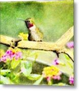 Hummingbird Attitude - Digital Paint 1 Metal Print