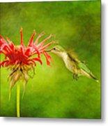 Hummingbird Bee Balm And Textures Metal Print