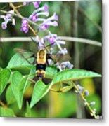 Hummingbird Bee Metal Print