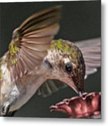 Hummingbird. Metal Print