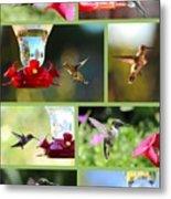 Hummingbird Collage 2 Metal Print