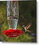 Hummingbird Coming For Dinner Metal Print