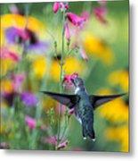 Hummingbird Dance Metal Print by Dana Moyer