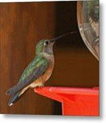 Hummingbird De Metal Print
