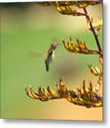 Hummingbird Drinking Nectar Metal Print