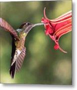 Hummingbird Enjoying Beautiful Flower Metal Print
