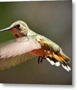 Hummingbird Facing Left Metal Print