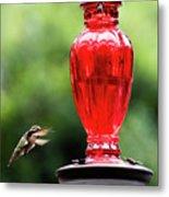 Hummingbird Feeder Metal Print