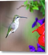 Hummingbird Found In Wild Nature On Sunny Day Metal Print