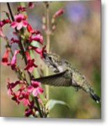 Hummingbird Haven  Metal Print