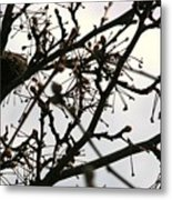 Hummingbird Heaven Metal Print