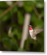 Hummingbird Hovering Metal Print