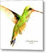 Hummingbird I Metal Print