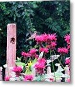 Hummingbird In Bee Balm Metal Print