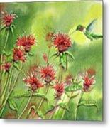 Hummingbird In Beebalm Metal Print