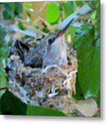 Hummingbird In Nest 1 Metal Print