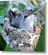 Hummingbird In Nest 2 Metal Print