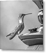 Hummingbird Intrigue  Metal Print