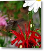 Hummingbird Mid Flight Metal Print