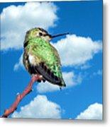 Hummingbird On High Metal Print