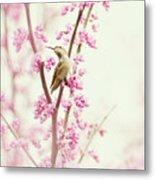 Hummingbird Perched Among Pink Blossoms Metal Print