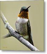 Hummingbird Portrait Square Metal Print