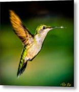 Hummingbird Sparkle Metal Print