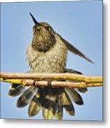 Hummingbird Spreading Wings Metal Print