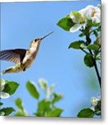 Hummingbird Springtime Metal Print
