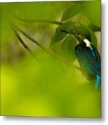 Hummingbird Wants To Hide Metal Print