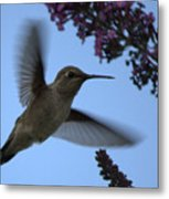 Hummingbird Wings And Butterfly Bush Metal Print