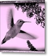 Hummingbird With Old-fashioned Frame 2  Metal Print