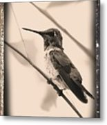 Hummingbird With Old-fashioned Frame 3 Metal Print