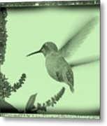 Hummingbird With Old-fashioned Frame 5 Metal Print