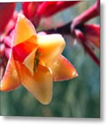 Hummingbird Yucca Metal Print