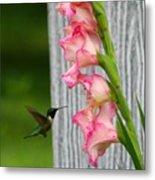 Hummingbird1 Metal Print