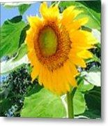 Humongous Sunflower Metal Print