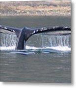 Humpback Whale Fluke Metal Print