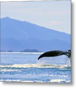 Humpback Whale Flukes Metal Print